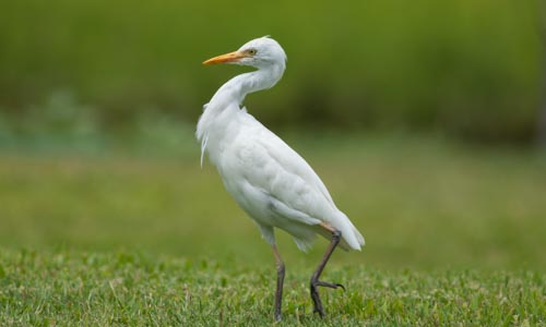 birds500-4330